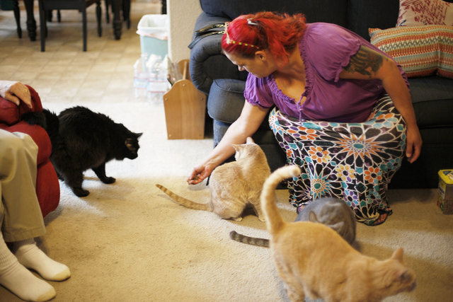 Cheryl Culpepper feeds treats to her family's cats at their home in Henderson, Thursday, April 28, 2016. Culpepper, who was a meth addict for 37 years, is now clean and using Nevada Legal Services ...