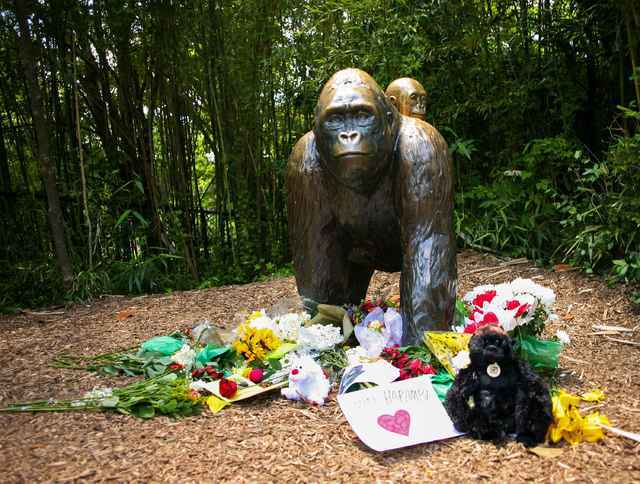 Flowers lay around a bronze statue of a gorilla and her baby outside the Cincinnati Zoo's Gorilla World exhibit, two days after a boy tumbled into its moat and officials were forced to kill Haramb ...
