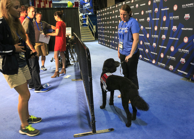 Larry, a goldendoodle, waits for athletes to arrive while working as a therapy dog at the U.S. Olympic swimming trials in Omaha, Neb., Wednesday, June 29, 2016. USA Swimming, in an effort to ease  ...
