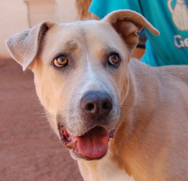 Chance, Nevada SPCA