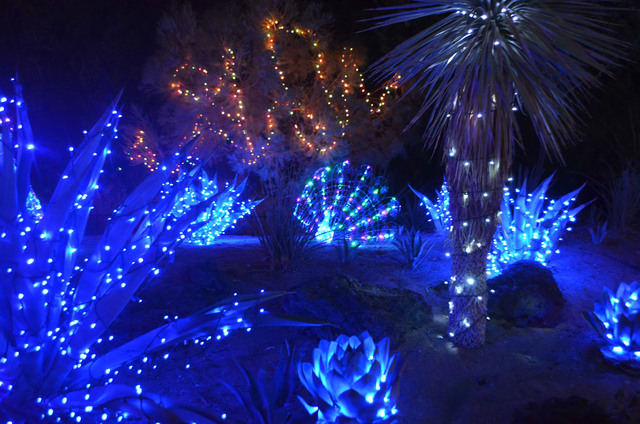 A peacock accent can be viewed at the Ethel M Botanical Cactus Garden as part of the 2014 holiday display. (Ginger Meurer/View)