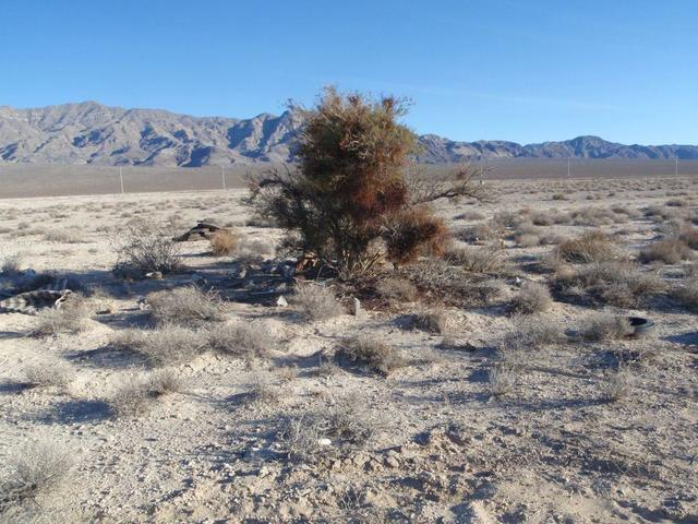 COURTESY The roots of mesquite trees can be extremely invasive.