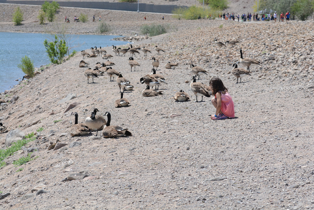 A little girl feeds the ducks during the Jr Hero Run May 21, 2016, at Cornerstone Park, 1600 Wigwam Parkway. Courtesy of moorephotosbybarry, Barry Moore, Photographer
