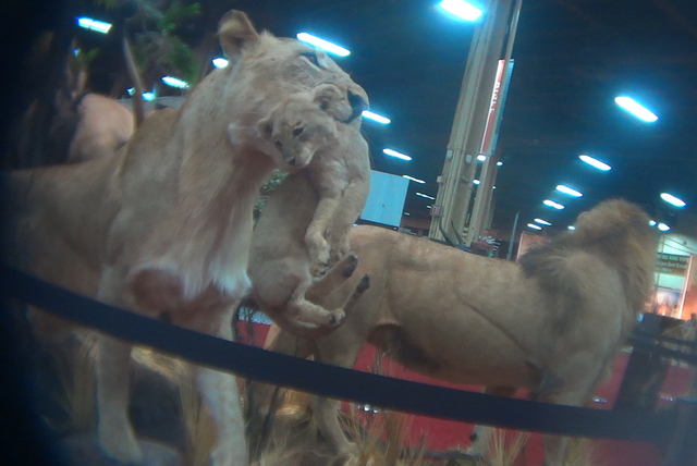 Screenshot of YouTube video of Safari Club International's Las Vegas convention in February. (Courtesy of the Humane Society of America)