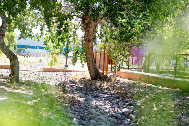 A natural spring bed resides in the newly renovated Kiel Ranch, one of the oldest areas of North Las Vegas, June 29, 2016. Kiel Ranch Historic Park will open as a 7-acre park during a ceremony on  ...