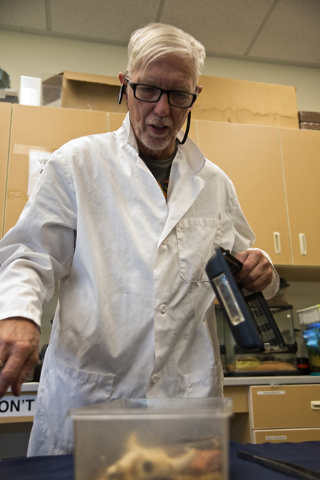 M.L. Robinson opens a container filled with bark scorpions in the University of Nevada Cooperative Extension lab in Las Vegas May 26, 2016. Daniel Clark/View