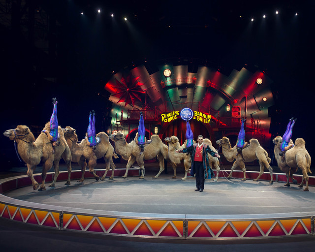 "The all-female Desert Goddesses show off their equestrian skills on two-humped Bactrian camels in ""Circus Xtreme."" (Feld Entertainment)"