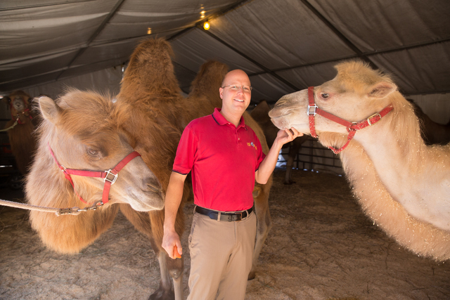 """Assistant animal superintendent Ryan Henning, assistant animal superintendent hangs out backstage with the Bactrian camels featured in """"Circus Xtreme."""" (Feld Entertainment)"""