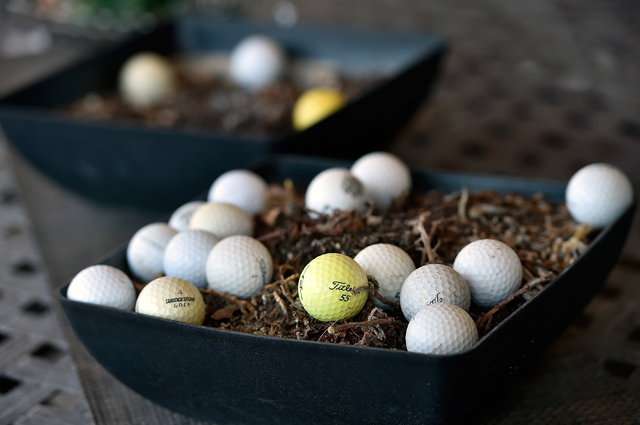 Lost golf balls are seen collected in a planter at the Silverstone home of Melanie Hill Monday, May 23, 2016, in Las Vegas. (David Becker/Las Vegas Review-Journal) Follow @davidjaybecker