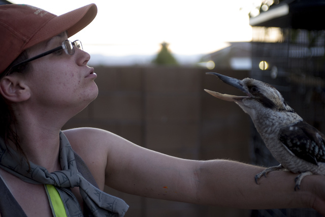 Senior zookeeper Casey Fox makes a kookaburra chirp at Roos-N-More in Moapa, Nev., on Thursday, June 2, 2016. Bridget Bennett/Las Vegas Review-Journal Follow @bridgetkbennett