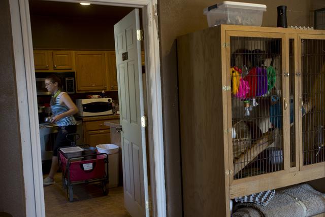 Senior zookeeper Casey Fox prepares morning meals for animals at Roos-N-More in Moapa, Nev., on Thursday, June 2, 2016. Bridget Bennett/Las Vegas Review-Journal Follow @bridgetkbennett