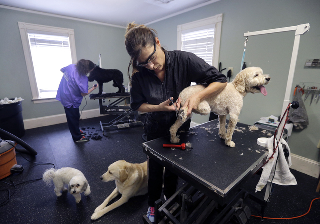 Dog groomer Heather McQuarrie works on Bailey at Bark of the Town in North Andover, Mass., March 23, 2016, On Thursday, July 7, 2016, payroll processor ADP reports how many jobs private employers  ...