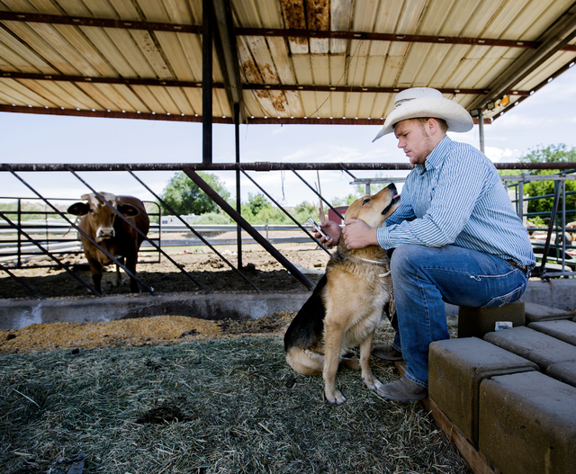 Arden Bundy and his dog Spur sit near the corrals at the Bundy Ranch in Bunkerville, Nev., on Thursday, May 19, 2016.  (Jeff Scheid/Las Vegas Review-Journal) Follow @jlscheid