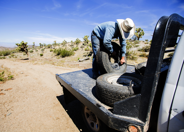 Arden Bundy, 18, secures a spare tire while checking water tanks on Thursday, May 19, 2016. Bundy, the youngest of 14 siblings, is now running the Bundy Ranch.  (Jeff Scheid/Las Vegas Review-Journ ...