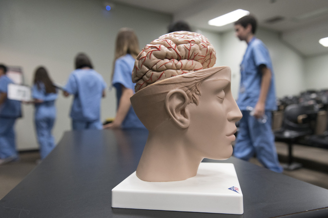 A model brain sits on a table as CampMed students exit a classroom following a neurology lesson at UNLV July 22. The program is designed to simulate medical career opportunities for students enter ...