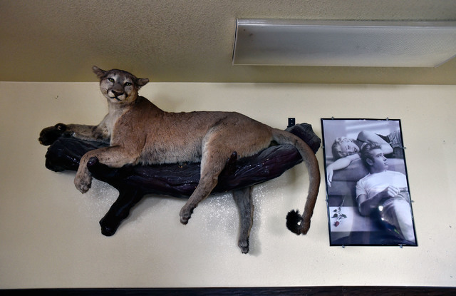 A stuffed mountain lion and a poster of Marilyn Monroe and James Dean share a wall at the Manhattan Bar Thursday, June 9, 2016, in Manhattan, Nev. The old-time bar has served its customers for dec ...