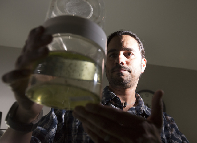 Vivek Raman, Environmental Health Supervisor at the Southern Nevada Health District, hold an emergence jar full of  mosquitoes in the lab on Monday, May 2, 2016. (Jeff Scheid/Las Vegas Review-Jour ...