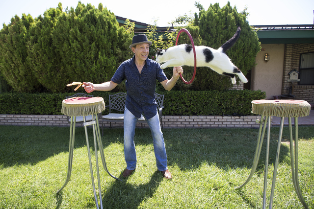Gregory Popovich practices a jump with his cat at his North Las Vegas home June 24. Erik Verduzco/View