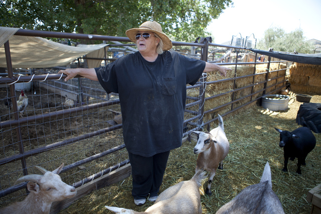 Sharon Linsenbardt, the owner of The Farm, interacts with her rescued farm animals on Saturday, June 2, 2016, in Las Vegas. Loren Townsley/Las Vegas Review-Journal Follow @lorentownsley