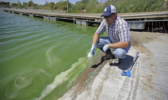 Jason Garrett, water quality bureau director at the Utah County Health Department, looks at the water in Utah Lake Wednesday, July 20, 2016, near American Fork, Utah. (Rick Bowmer/The Associated P ...