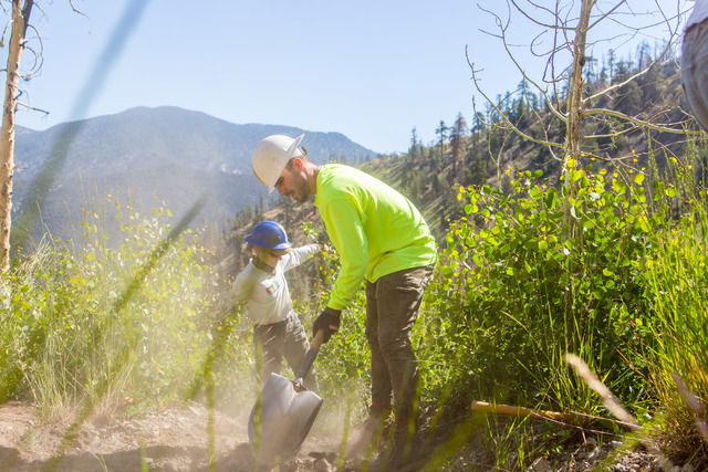 Luke Burns, an intern with Friends of Nevada Wilderness, works with other crew members from Great Basin Institute and volunteers from Friends of Nevada Wilderness on the South Loop Trail of Mount  ...