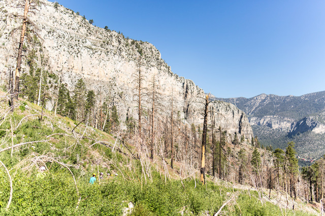 Crews from Great Basin Institute and volunteers from Friends of Nevada Wilderness work on the South Loop Trail of Mount Charleston June 25. Elizabeth Brumley/View
