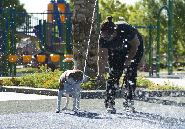Annette Lee and her dog, Samantha, play in the water at South Tower Park in Las Vegas on Friday, July 22, 2016. (Daniel Clark/Las Vegas Review-Journal Follow @DanJClarkPhoto)