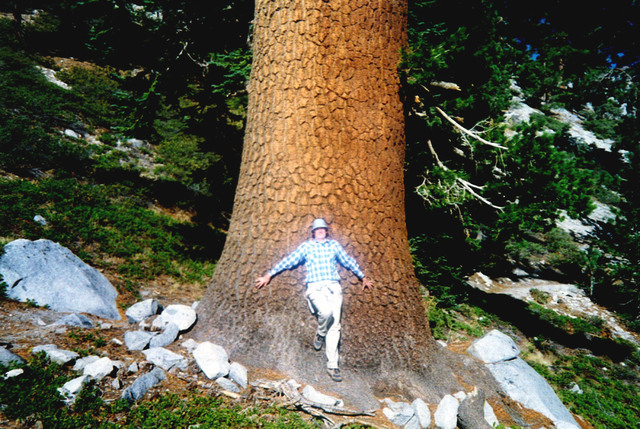 Rod Haulenbeek leans against the trunk of Nevada's largest western white pine tree near Lake Tahoe in an undated photo. Haulenbeek stalks the state's champion trees as editor of the Nevada Big Tre ...