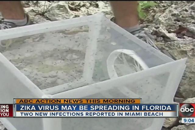 Cdc Tells Pregnant Women To Avoid Miami Beach Because Of