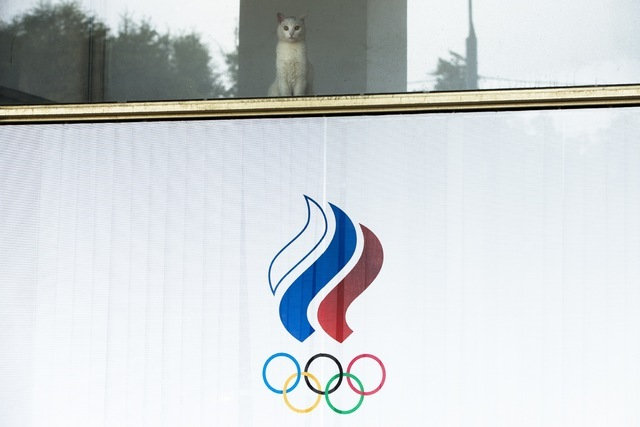 A cat looks through a window of the Russian Olympic Committee building in Moscow, Russia, Sunday, July 24, 2016. The IOC has decided against a complete ban on Russian athletes from the Olympics in ...
