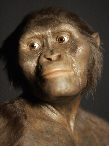 A three-dimensional model of the early human ancestor, Australopithecus afarensis, known as Lucy, on display at the Houston Museum of Natural Science, Aug. 14, 2007. (Pat Sullivan/AP)