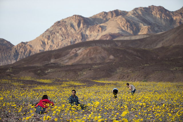"In this Feb. 24, 2016 photo, tourists take picture of wildflowers near Badwater Basin in Death Valley, Calif. A rare ""super bloom"" of wildflowers in Death Valley National Park covered the hottest  ..."