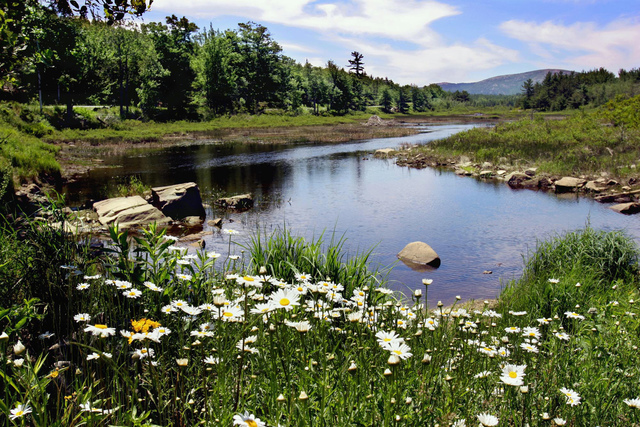 In this June 21, 2005, file photo, a stream in Acadia National Park on Mt. Desert Island, Maine, captures some of the park's beauty. The park is home to many plants and animals, and the tallest mo ...