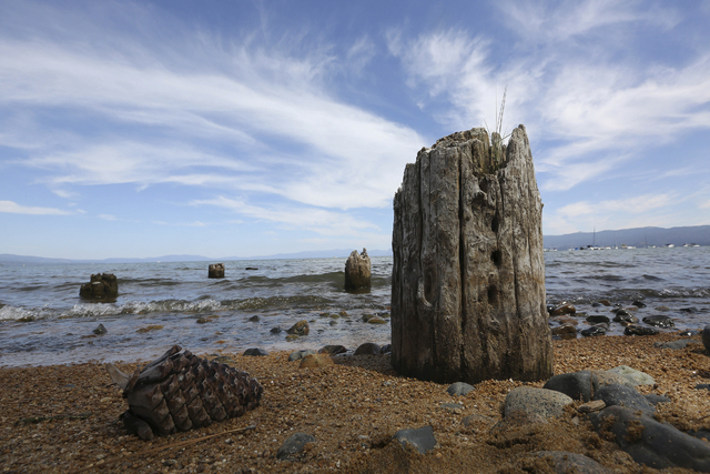 The normally submerged pilings of a old pier are seen Tuesday, Aug. 19, 2014, in South Lake Tahoe, Calif.  Nevada Gov. Brian Sandoval said at the 18th Annual Lake Tahoe summit that the declining l ...