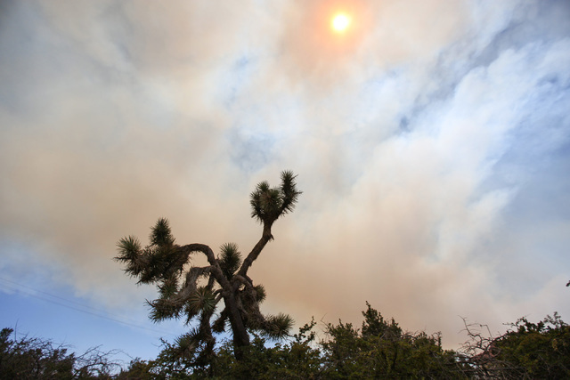 A Joshua Tree is silhouetted by an orange sun shining through the plume of smoke created by the Blue Cut Fire in Hesperia, Calif., on Wednesday, Aug. 17, 2016. Brett Le Blanc/Las Vegas Review-Jour ...