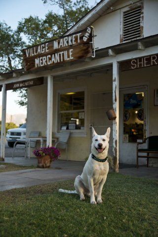A dog named Baley sits in front of the Village Market and Mercantile in the town of Blue Diamond on Wednesday, Aug. 10, 2016. (Daniel Clark/Las Vegas Review-Journal) Follow @DanJClarkPhoto