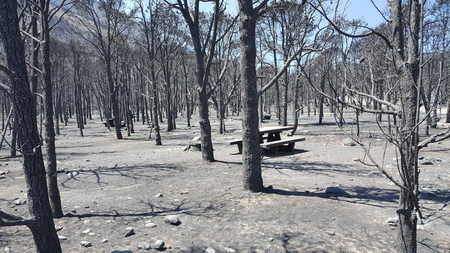 Burned trees and ash-covered ground surround a picnic table Thursday at the Strawberry Creek Campground at Great Basin National Park. (Great Basin National Park)