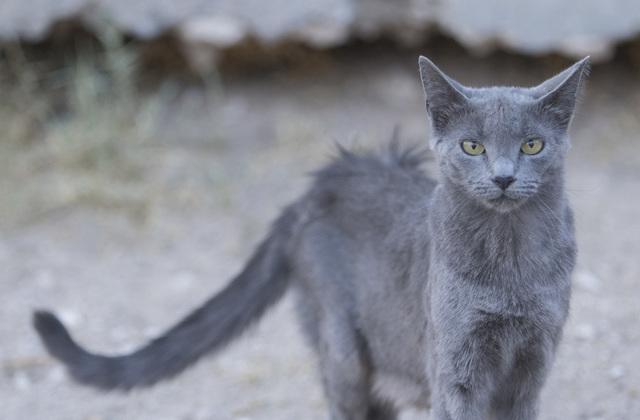 best remedies for cat fleas