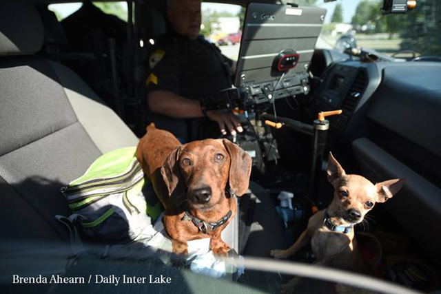 Two small dogs get a front seat ride away from the trailer where they had been kept at 427 King's Way in Evergreen, on Monday morning, August 22. (The Daily Inter Lake/Facebook)