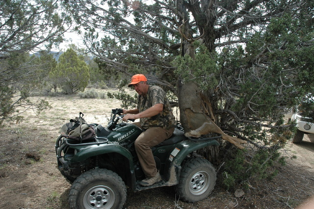 An ATV can make hanging a game animal an easier task. Don Nash of Alamo, prepares to pull out from a under a deer carcass so it can be skinned and hung in the shade. (Doug Nielsen/Las Vegas Review ...