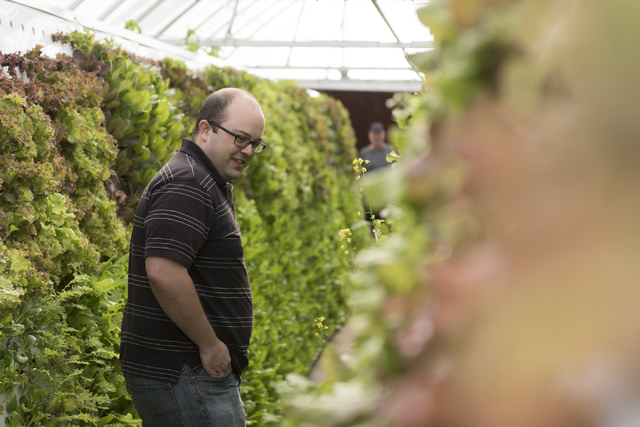 Brett Uniss, executive chef at B&B Ristorante, browses for ingredients at Tom Blount's hydroponic greenhouse in Henderson July 20. Jason Ogulnik/View
