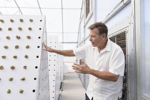 Tom Blount gives a tour of his hydroponic greenhouse in Henderson July 20. Jason Ogulnik/View