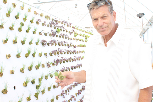 Tom Blount talks about hydroponics inside his Henderson-based greenhouse. Michael Lyle/ View
