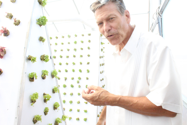 Instead of using soil, Tom Blount has been using hydroponics to grow a variety of vegetables. He recently opened a hydroponics greenhouse in Henderson. Michael Lyle/ View