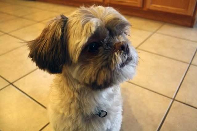 Dog dies after being left inside Henderson Animal Control