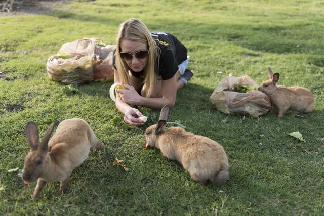 Rabbit activist Stacey Taylor feeds rabbits at Floyd Lamb Park at Tule Springs July 31. Jason Ogulnik/View