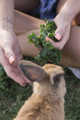 Rabbit activist Stacey Taylor feeds kale to a rabbit at Floyd Lamb Park at Tule Springs in Las Vegas Sunday, July 31, 2016. The park is one of several locations in the valley where domesticated ra ...