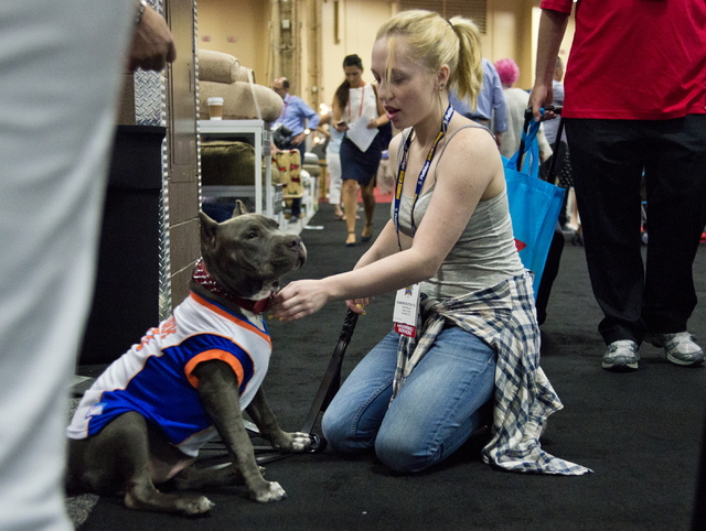 Kameron Stratton fits her dog with a new jersey during the SuperZoo Trade Show at the Mandalay Bay Convention Center on the Las Vegas Strip on Tuesday, Aug. 2, 2016. (Daniel Clark/Las Vegas Review ...