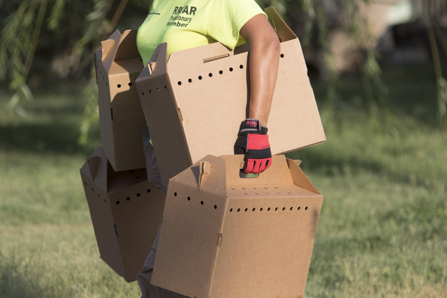 Officials are seen removing birds in boxes at a residence in the 4700 block of Stanley Avenue near Marion Drive in Las Vegas on Wednesday, Aug. 3, 2016, where Metro police served a search warrant  ...