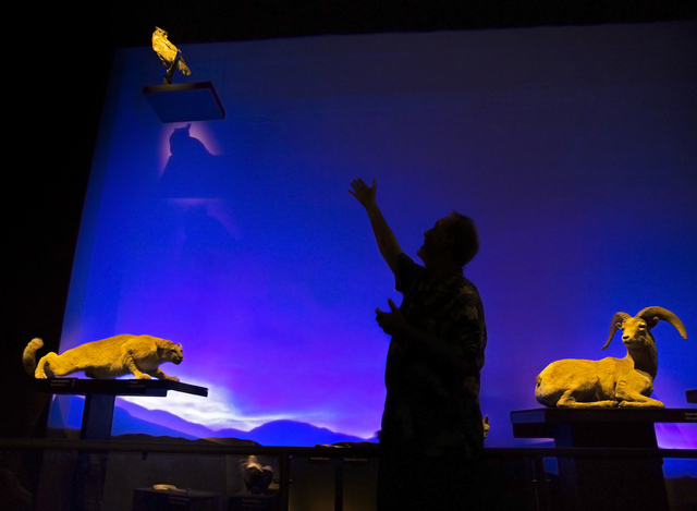 Museum director Dennis McBride points out highlights of an exhibit featuring desert wildlife at the Nevada State Museum, Las Vegas. (Benjamin Hager/Las Vegas Review-Journal)